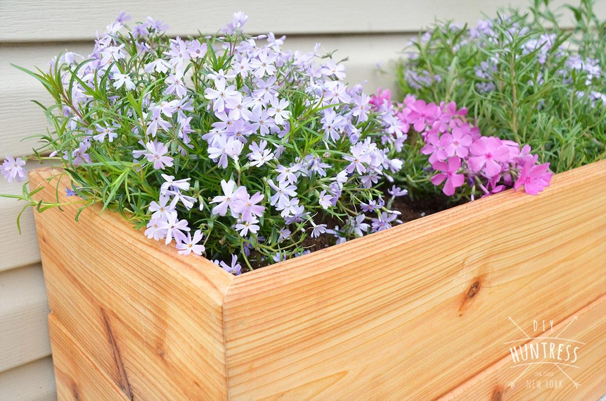 diy_modern_cedar_planter-3