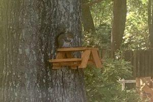 Squirrel Picnic Table Hanging Feeder