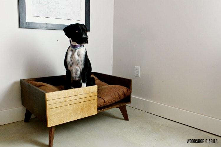 lucy-sitting-in-diy-modern-large-dog-bed-small