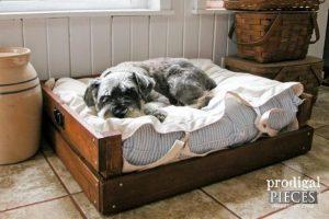 Build a Pet Bed